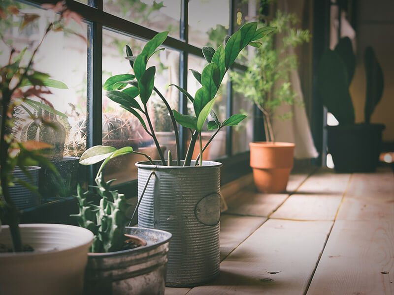 Herb plants in pots next to a window
